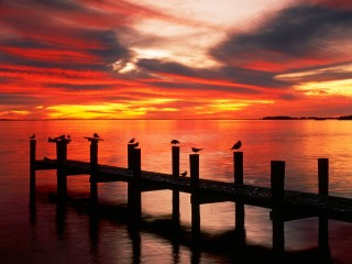 Seagulls at Sunset  Fort Myers  Florida