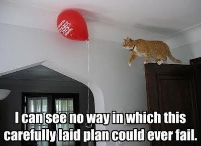 Best laid plans of mice and men cat