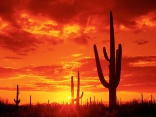Burning Sunset  Saguaro National Park  Arizona