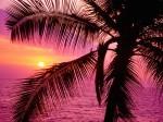 Tropical Setting  Hawaii
