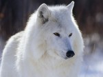 Animals Wallpapers  95