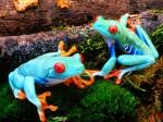 Frog Wallpaper  20