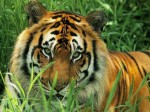 Animals Wallpapers  36