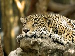 Animals Wallpapers  12
