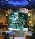 Maintaining Aquariums at home