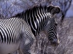 Animals Wallpapers  42