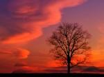Crimson Twilight  Kentucky