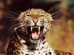 Animals Wallpapers  44
