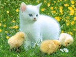 Animals Wallpapers  9