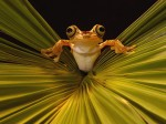 Frog Wallpaper  5