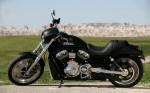 Harley  31