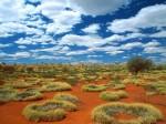 Old Spinifex Rings  Little Sandy Desert  Australia